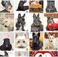 Icon_many dogs